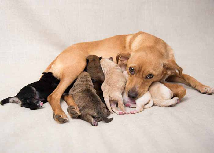 Momma dog with her puppies nursing