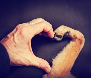 Human hand and dog paw making a heart